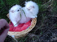 kittens4.jpg